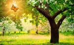 Ser amigables con la naturaleza