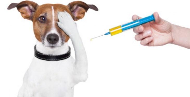 Vacunación de las mascotas en etapa de Villa Club