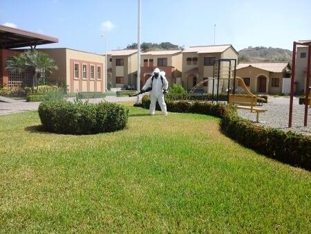 control de plagas en casas de villa club 2